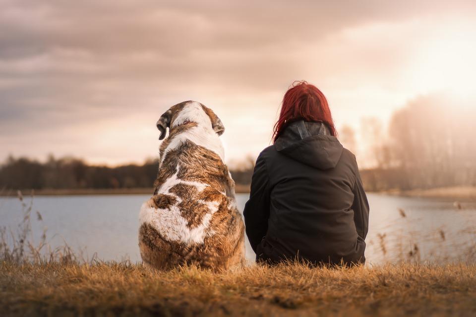 애완동물이라는 표현보다 반려동물이라는 표현을 더 흔하게 쓰는 세상이다