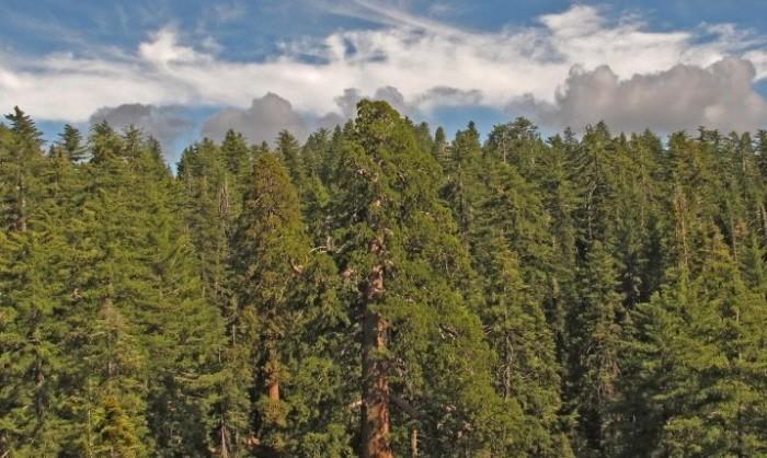 parrot_sequoia_161209_1