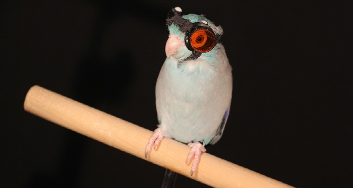 birds_161214_1